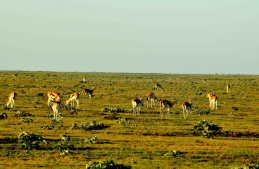 Serengeti and Sale Plains